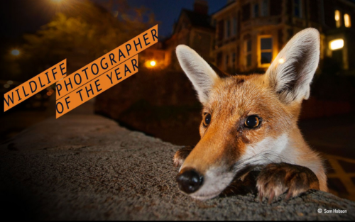Wildlife Photographer: le più belle foto a tema naturalistico-animale al Natural History Museum