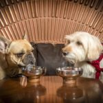 DOG-COCKTAILS-Smith-Whistle-Max-dog-cocktail-menu-launch-for-National-Pet-Month